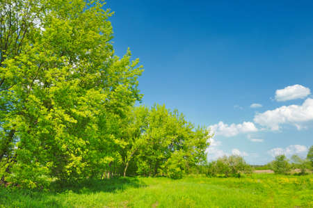 scrub grass: Spring landscape with trees growing in the meadow