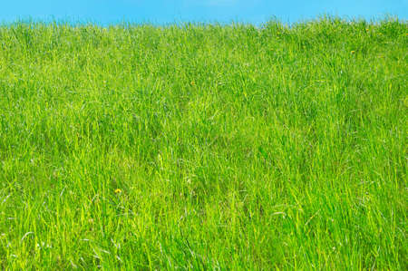 hillock: Background with fresh green grass on the hillock  Stock Photo