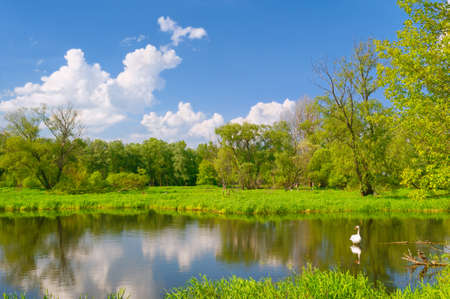 Beautiful landscape with swan in the flood waters of Narew river, Poland   Stock Photo - 13831028