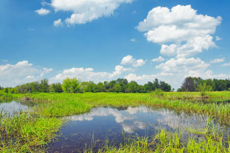 Meadow with the swamp near Narew river in Poland photo
