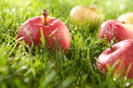 Apple and dew Banco de Imagens - 13887996