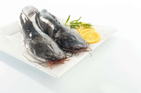 Two catfishes on a plate