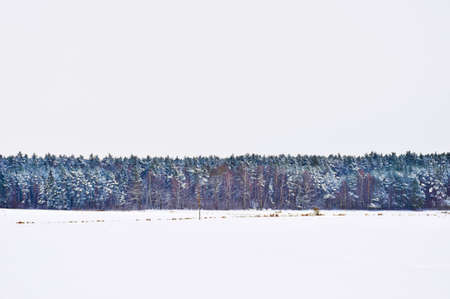 Winter landscape with forest and white sky photo
