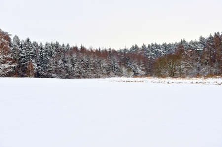 Winter landscape with forest and white sky Stock Photo - 17101740