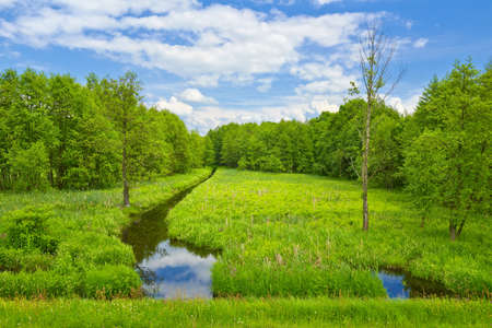 hdr: Landscape with brook and meadow and forest