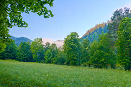 Beautiful  morning with trees in Pieniny mountains
