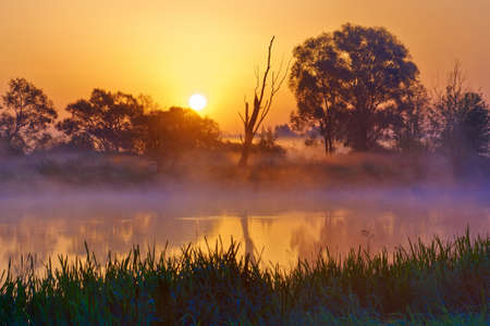 Beautiful foggy sunrise over the Narew river , Mazovia, Poland