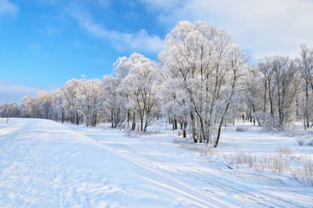 Snowy landscape in the Narew river valley  Beautiful winter trail in Poland