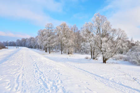 Snowy landscape in the Narew river valley  Beautiful winter trail in Poland  Stock Photo - 22816087