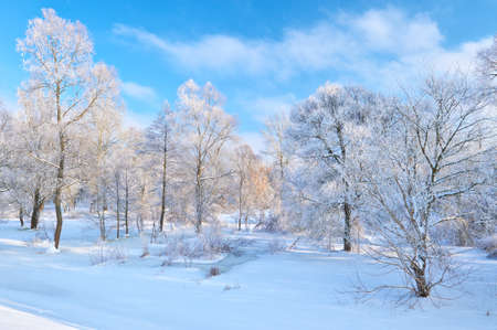 Snowy landscape by the Narew river valley  Beautiful winter