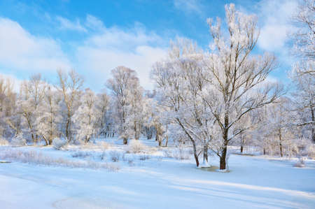 Snowy landscape by the Narew river valley with bare trees  Beautiful winter