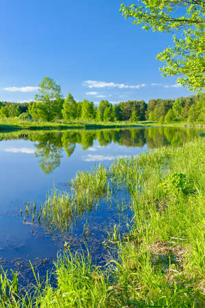 narew: Sunny landscape with The Narew braided river and green trees  Mazovia, Poland  Stock Photo