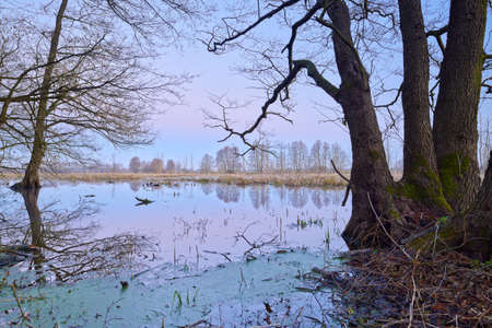 Wetland scenic. Mysterious landscape with flood waters of The Narew River. Beautiful dawn.