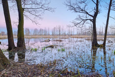 Wetland scenic. Mysterious landscape with flood waters of The Narew River. Beautiful dawn over natural preserve. photo