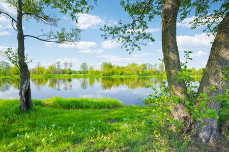 Trees by the riverside  Sunny spring landscape