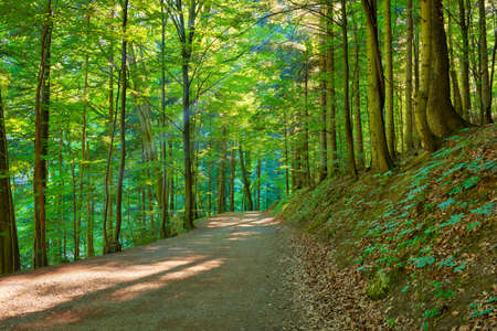 Trekking trail by green forest  Nature Reserve  Pieniny National Park  Banco de Imagens