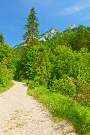 Hiking trail in The Pieniny Mountains  Spring landscape  Nature reserve  Banco de Imagens