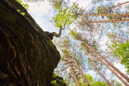 Wonderful world  Tree growing out of rock  The Hell Rocks near Nieklan, Poland