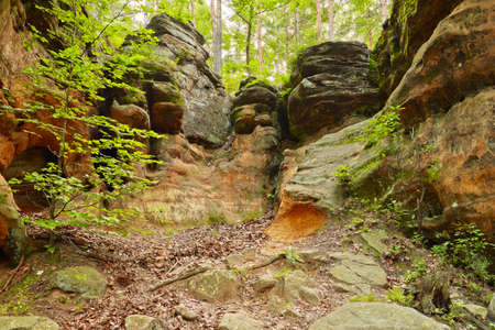 Old weathered rocks background  The Hell Rocks near Nieklan, Poland  Amazing geological features reserve