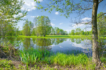 Sunny spring landscape  Trees at riverbank  Flood waters of The Narew River, Poland