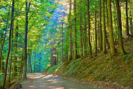 Trail by green deciduous forest  Nature Reserve  Pieniny National Park
