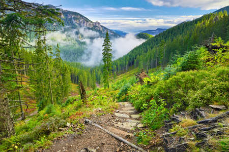 Mountain trail at the forest  The West Tatra Mountains, Carpathians  Nature reserve  photo