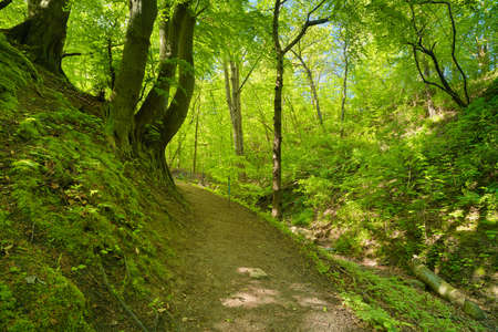 Trail by green deciduous forest  Way by nature reserve Banco de Imagens - 29394604