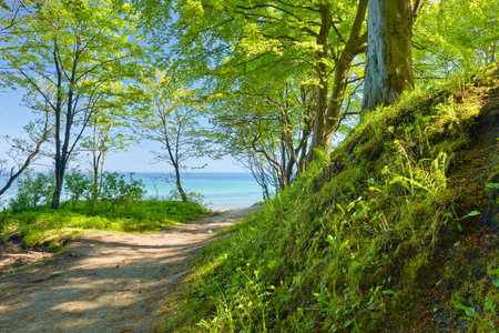 Trail to sea by green deciduous forest  Way by nature reserve Banco de Imagens - 29394606