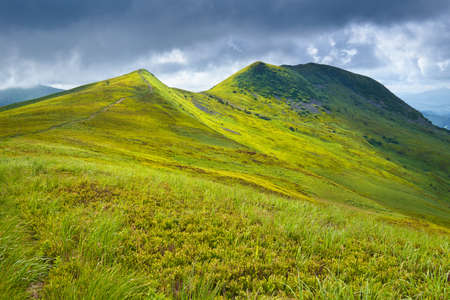 Mountains scenery  The Tarnica Peak  1346 m   Mountain landscape  Grass and meadow in The Bieszczady National Park  Carpathians  Podkarpackie Voivodeship, Poland  photo
