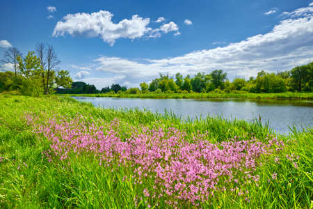 Spring summer flowers river landscape blue sky clouds countryside