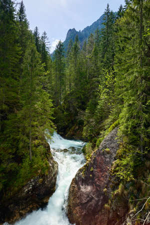 Green forest waterfall stream water river Tatra mountains Carpathians Banco de Imagens - 40961840
