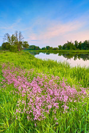 Countryside spring summer Narew river landscape blue sky clouds countryside Poland