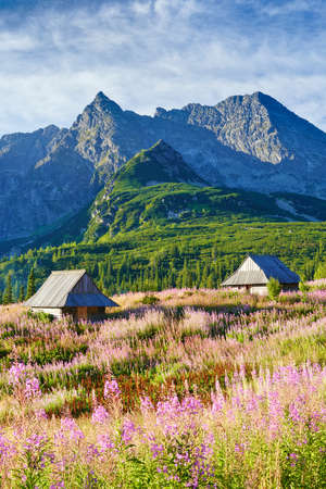 summer nature: Beautiful nature landscape Gasienicowa Valley High Tatra Mountains. Carpathians, Poland