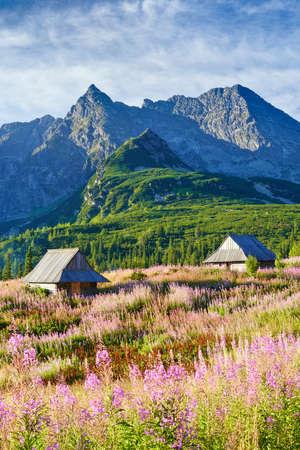 best shelter: Beautiful nature landscape Gasienicowa Valley High Tatra Mountains. Carpathians, Poland