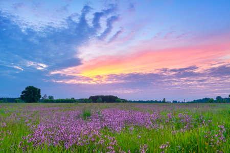 Beautiful sunrise countryside field flowers sky clouds landscape meadow Poland Banco de Imagens