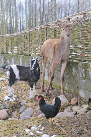 three animals: tre animali su sfondo primavera Archivio Fotografico