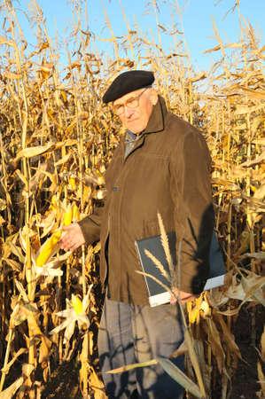 pensive grandfather in maize field photo