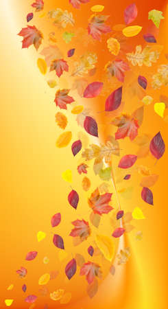 variegated: fall leafs on variegated background