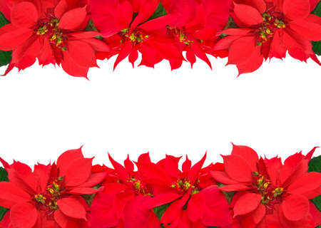 Christmas frame from red poinsettias isolated on white