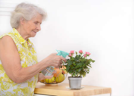Mature attractive woman watering flowers at home. Senior woman tending to her indoor plant. A woman of eighty years spray little rose