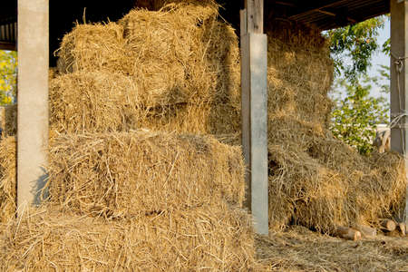 Bale of straw at country side photo