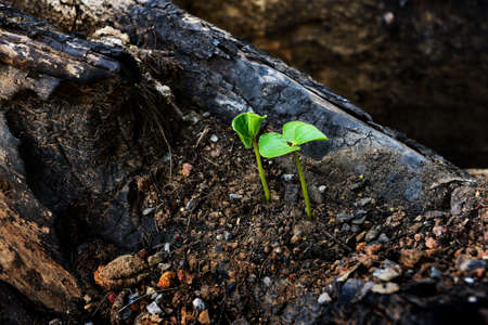 Green sprout growing from dead log photo