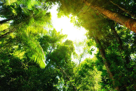 rainforest background: Tropical forest with sunlight