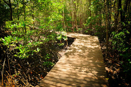 mangrove forest: Wooden bridge in the forest