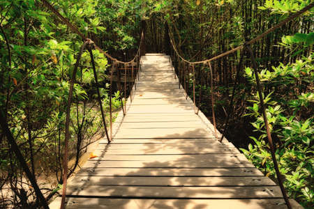 rope bridge: Wooden bridge in the forest