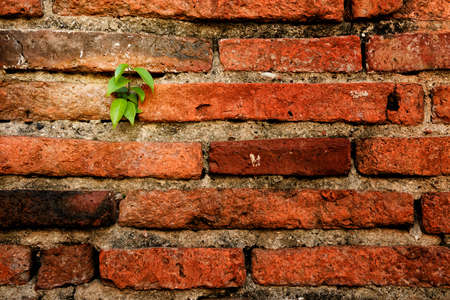 Red brick wall background and texture with small tree photo