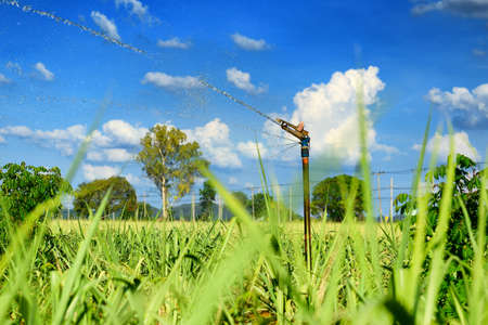 Sprinkler spraying water in the agriculture field photo