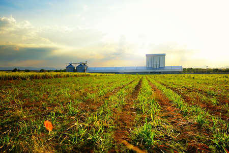 Agriculture factory with silo in the field