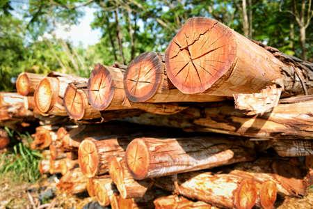 recursos naturales: Pila de madera