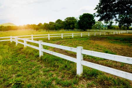 white picket fence: White concrete fence in horse farm field Stock Photo
